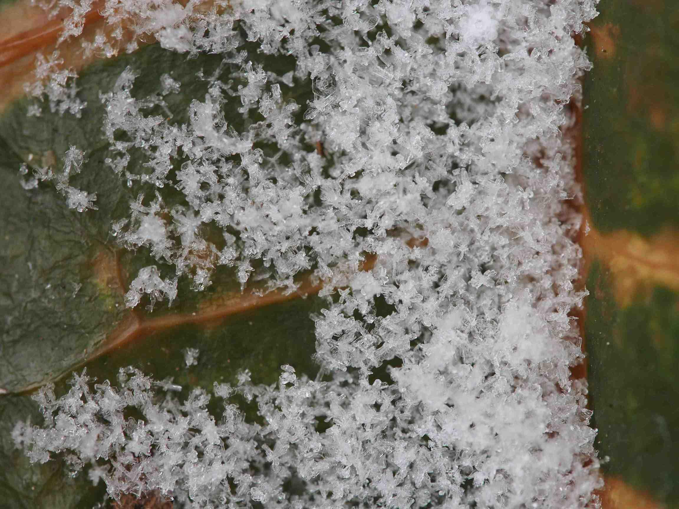 snow_macro.jpg