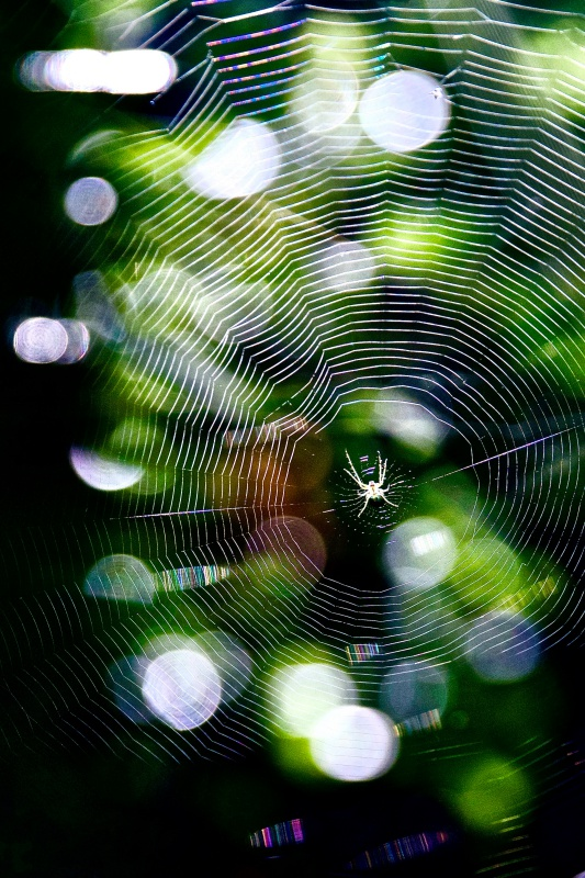 spider02.jpg