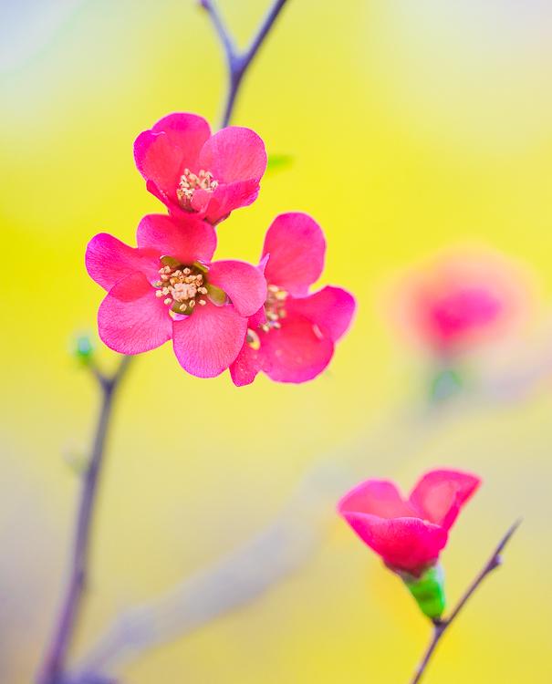 McDaniel-flower-2.jpg