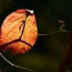 가을빛 by 파랑새