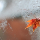 12월의 가을비 by 열_마_(aka열린마음)