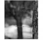 흑백사진 8월 숙제