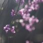 이름모를 봄꽃