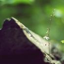 풀떼기 (과제16) by 아날로그