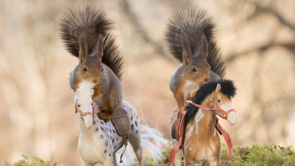 CT_squirrels_on_horse_01_as_160527_16x9_992.jpg