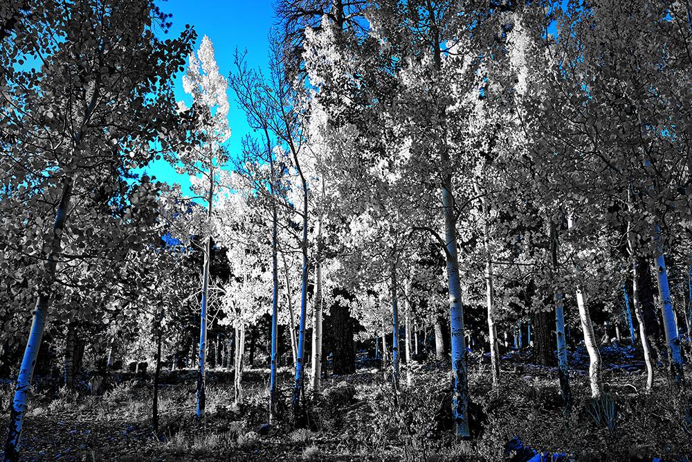 DSC_2265up3 easy Blue PS Dkr 1000px.jpg