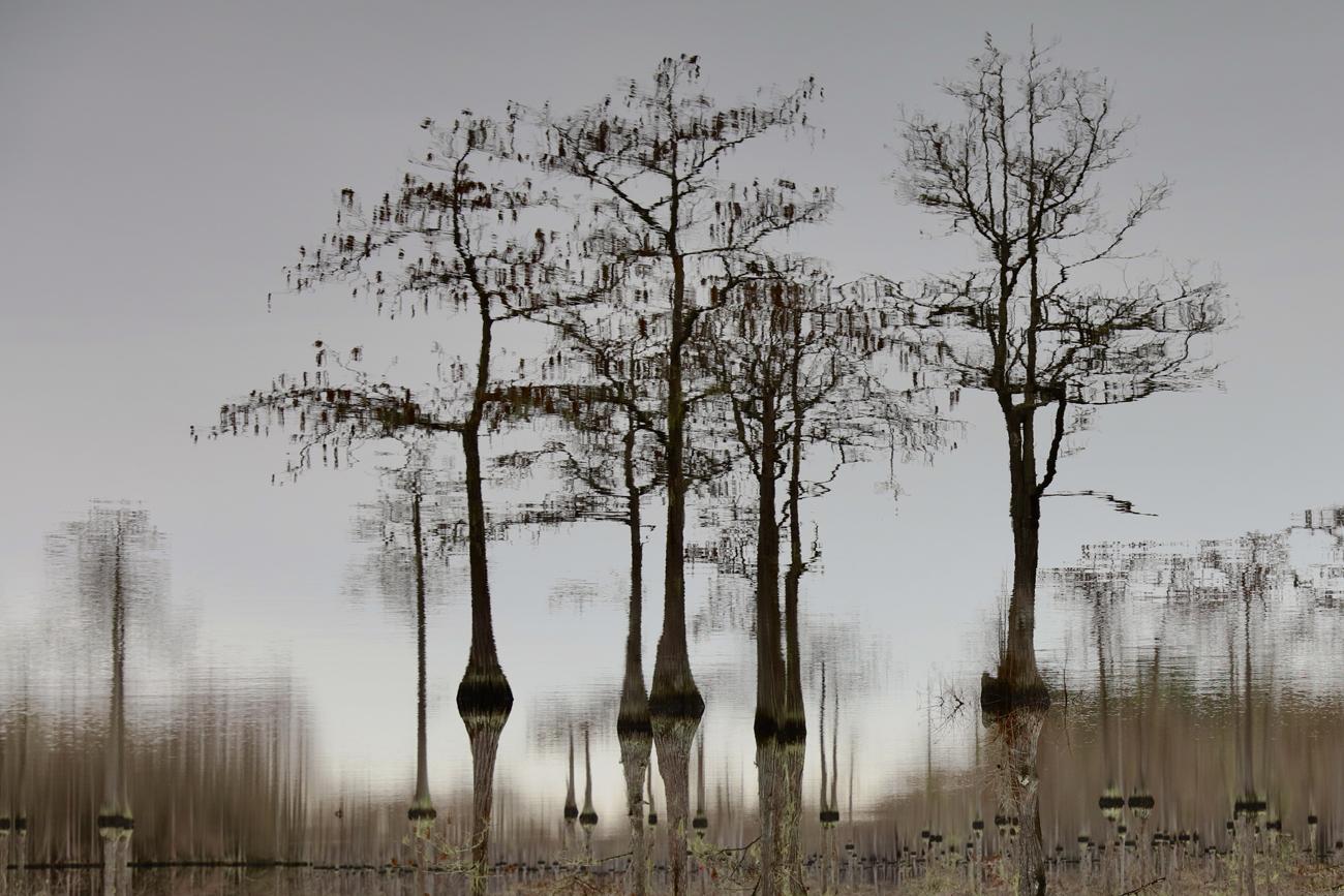 tree0001.jpg