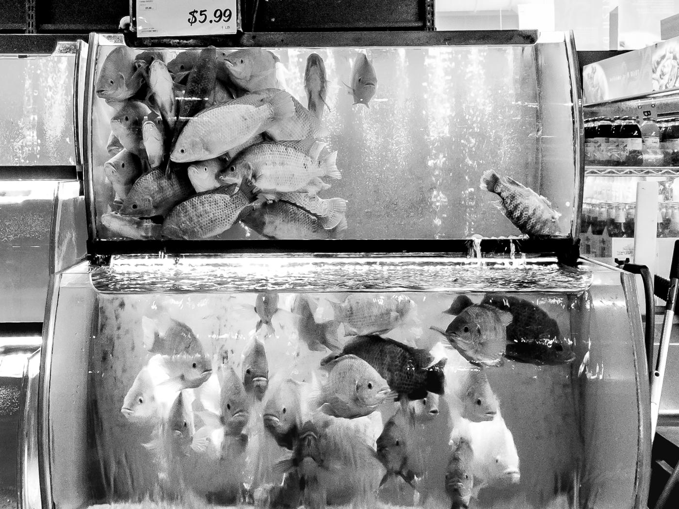 190210_DeadFish_Hmart_135535.jpg