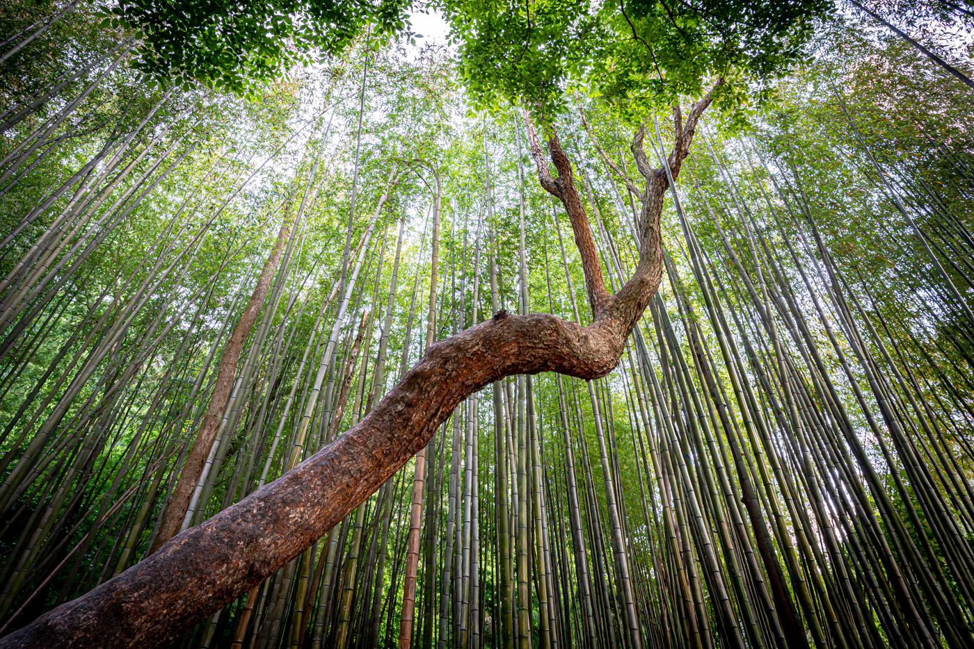 210515_Asadong_BambooForest_26963.jpg
